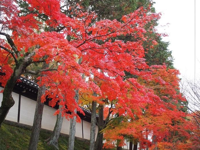 東福寺2_18_11_30