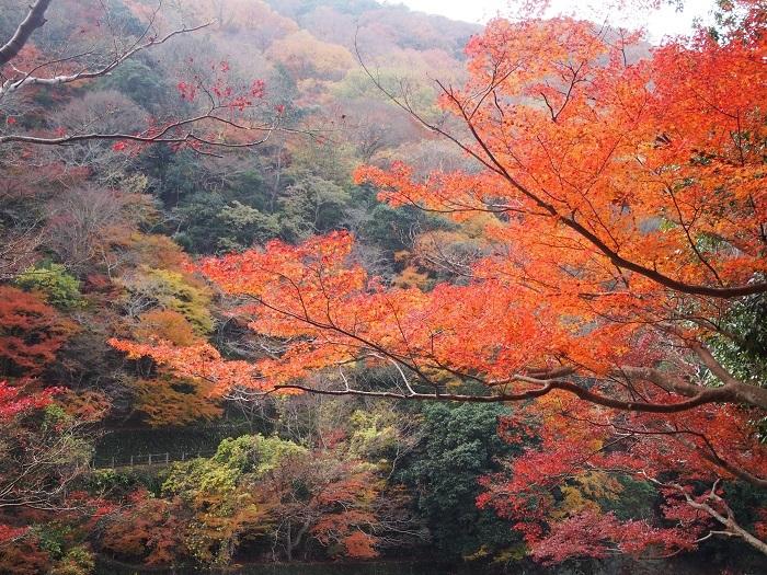 嵐山2_18_11_30