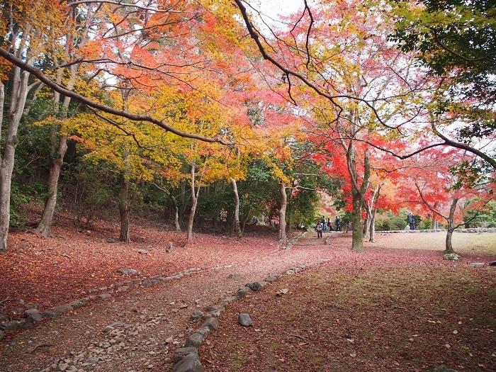 嵐山3_18_11_30