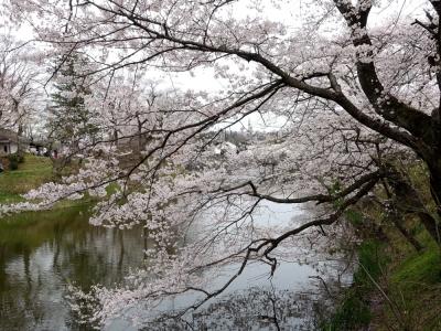棚倉城址・亀ヶ城公園の桜