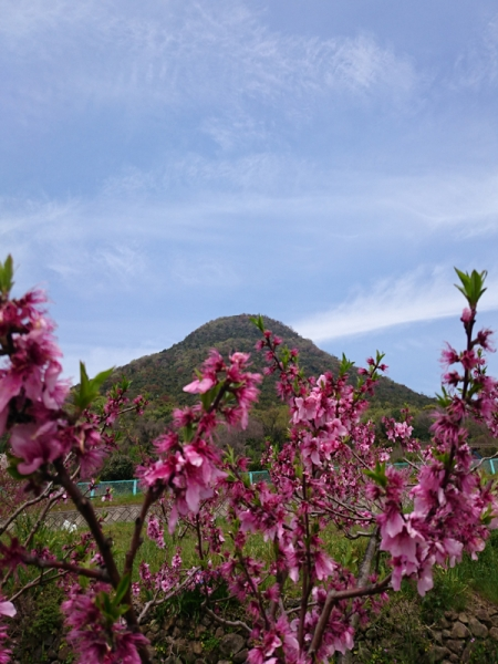 飯野山桃畑