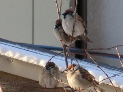 small-bird-161015.jpg