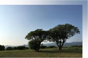 1685a空と木