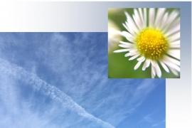 1685b空と花