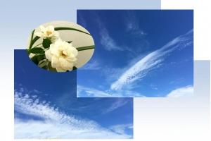 20161006空と花A