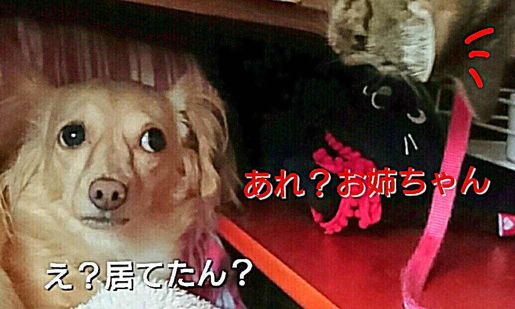 20160929120114c18.jpg