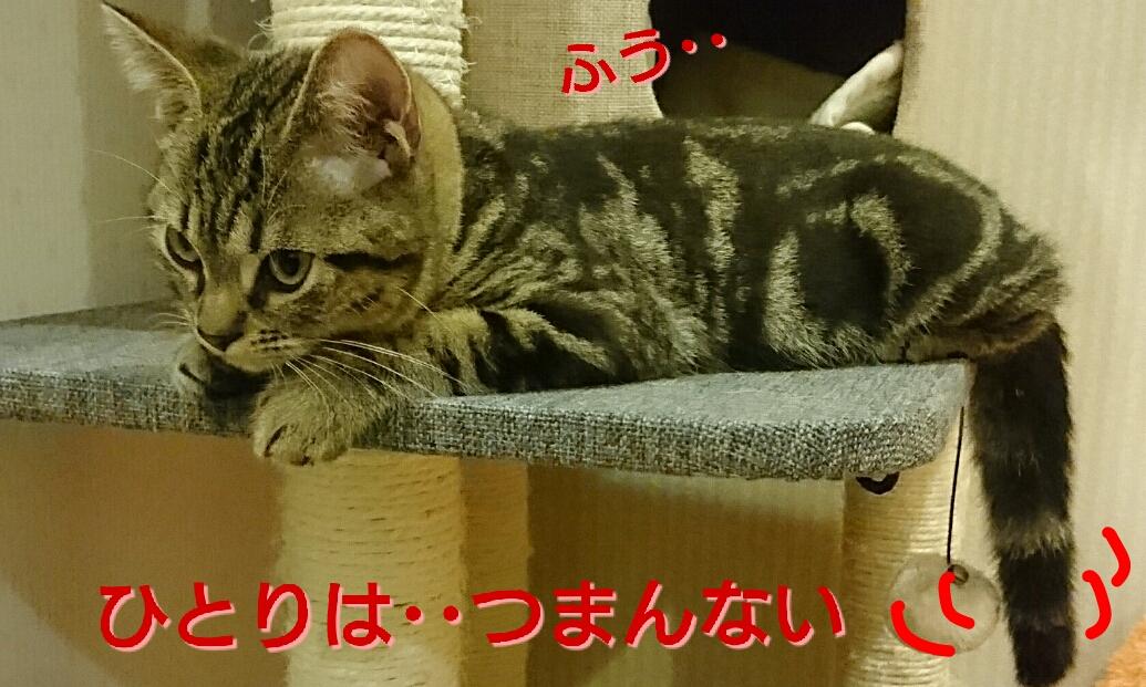 20161021144848a2e.jpg