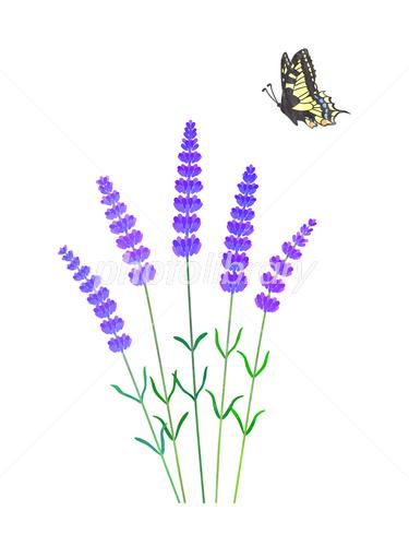 エコでナチュラルな自然イラスト素材 蝶ちょうと植物のイラスト