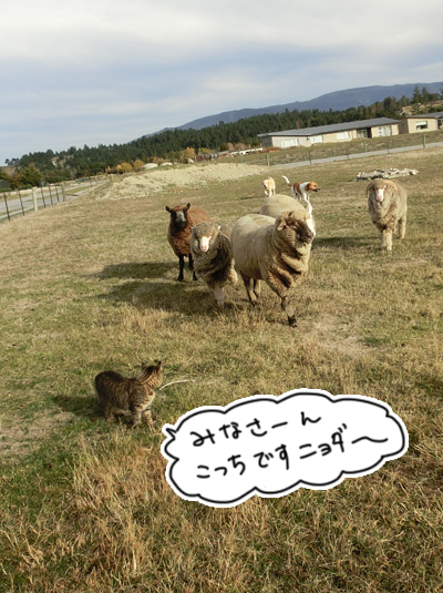 羊の国のラブラドール絵日記シニア!!「ファーム・キャットへの道」2