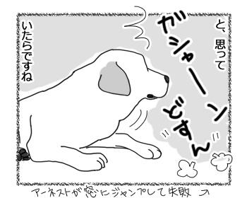 羊の国のラブラドール絵日記シニア!!「慣れただけ」3