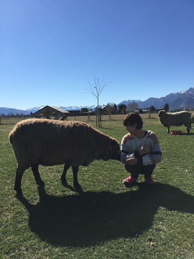 羊の国のラブラドール絵日記シニア!!「テオテオファームのおもてなし」3