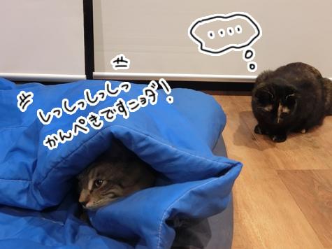 羊の国のラブラドール絵日記シニア!!「ねこ猫かくれんぼ」2