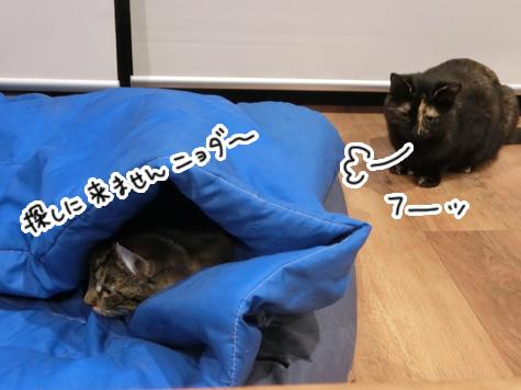 羊の国のラブラドール絵日記シニア!!「ねこ猫かくれんぼ」4