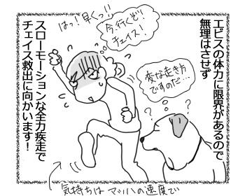 羊の国のラブラドール絵日記シニア!!「チェイス脱走!?」4
