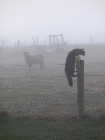 羊の国のラブラドール絵日記シニア!!「猫も木から・・・?」1