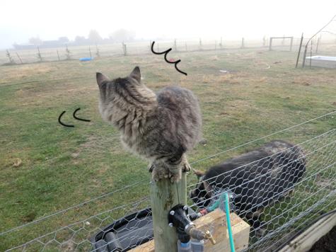 羊の国のラブラドール絵日記シニア!!「猫も木から・・・?」3