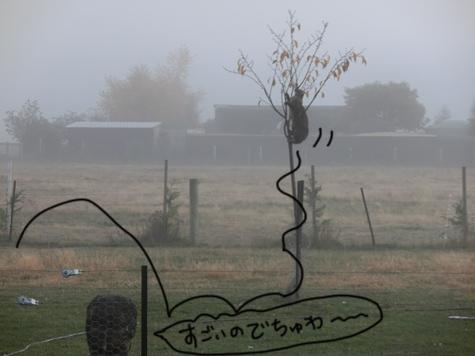 羊の国のラブラドール絵日記シニア!!「猫も木から・・・?」4