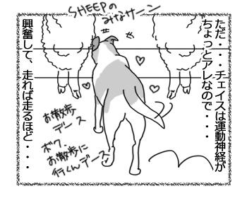 羊の国のラブラドール絵日記シニア!!「チェイス走り」3