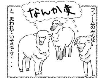 羊の国のラブラドール絵日記シニア!!「チェイス走り」4