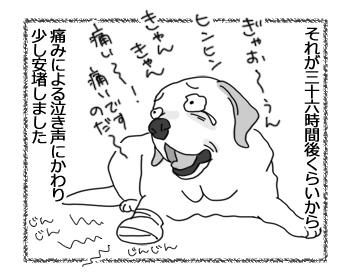 羊の国のラブラドール絵日記シニア!!「泣き虫エビス」2