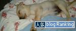 11102016_dogBanner.jpg