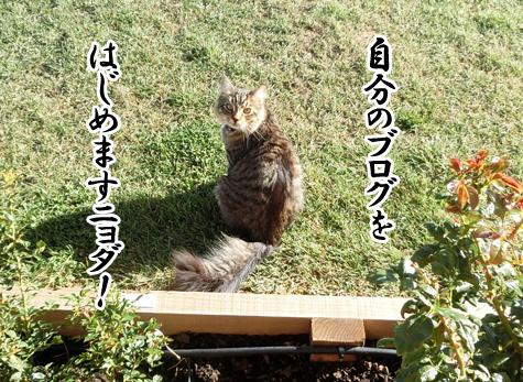 12042016_cat5.jpg