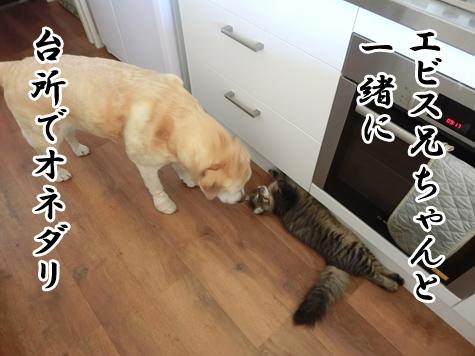 羊の国のラブラドール絵日記シニア!!「猫たちの朝」9
