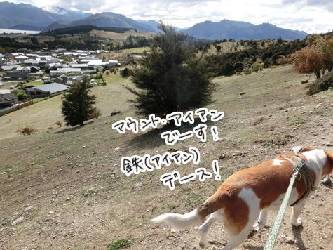 羊の国のラブラドール絵日記シニア!!「チェイスの午後」2