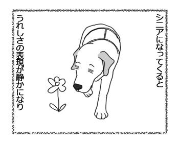 羊の国のラブラドール絵日記シニア!!「シニアのお散歩盛り上げ隊!」2