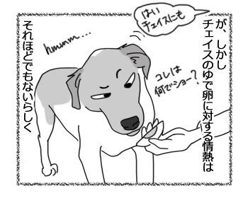 羊の国のラブラドール絵日記シニア!!「犬とゆで卵と私」4