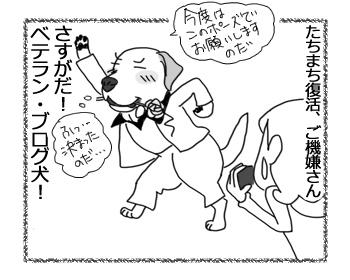 羊の国のラブラドール絵日記シニア!!「さすがベテラン」4b