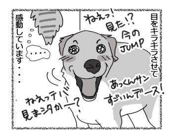 羊の国のラブラドール絵日記シニア!!「猫に夢中!?」2