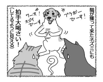 羊の国のラブラドール絵日記シニア!!「猫に夢中!?」3