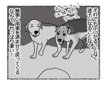 羊の国のラブラドール絵日記シニア!!「犬たちの勝ち!」3
