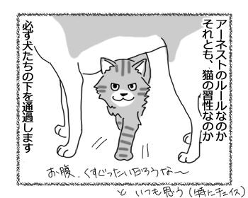 羊の国のラブラドール絵日記シニア!!「お腹の下の猫」1
