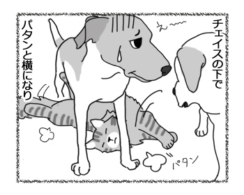 羊の国のラブラドール絵日記シニア!!「お腹の下の猫」3