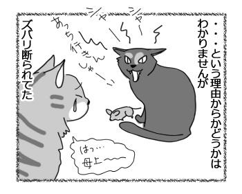 29042016_cat6.jpg