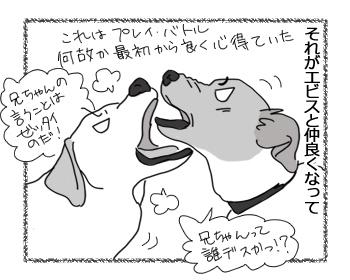 羊の国のラブラドール絵日記シニア!!「こっちも丸い!?」2