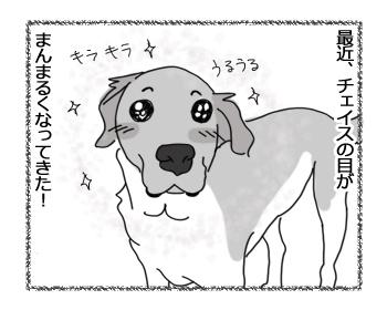 30052016_dog4.jpg