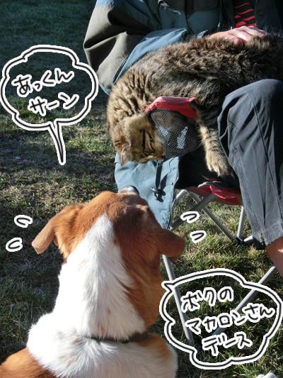 羊の国のラブラドール絵日記シニア!!「フワフワ級チャンピオン」5