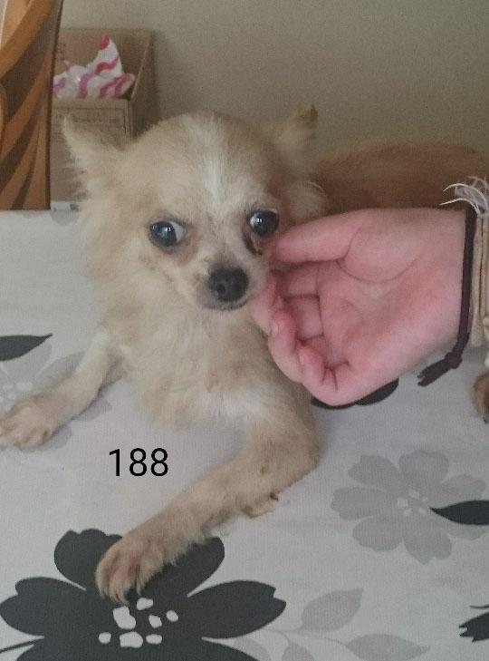 chiwawa_M4_188_918.jpg