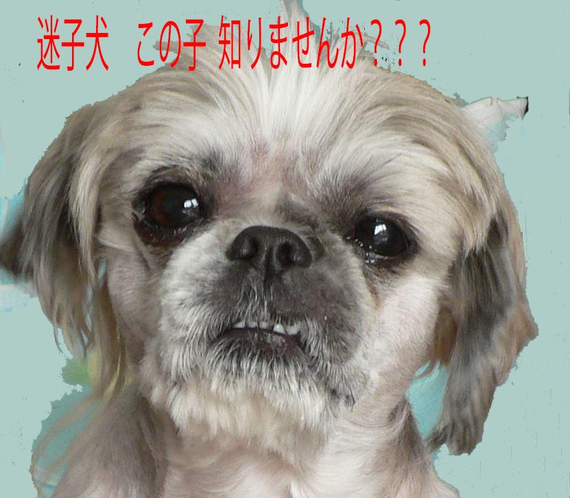 hanzo_857_.jpg