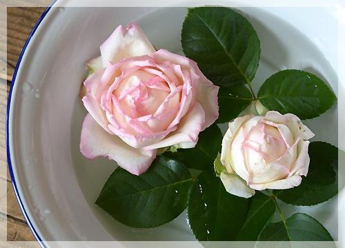 花キューピット