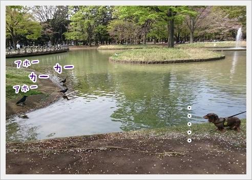 fc2_2016-04-11_02.jpg