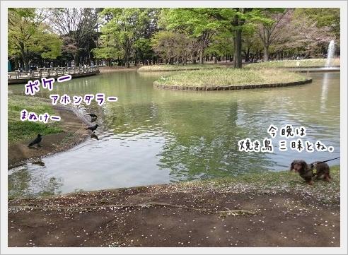 fc2_2016-04-11_03.jpg