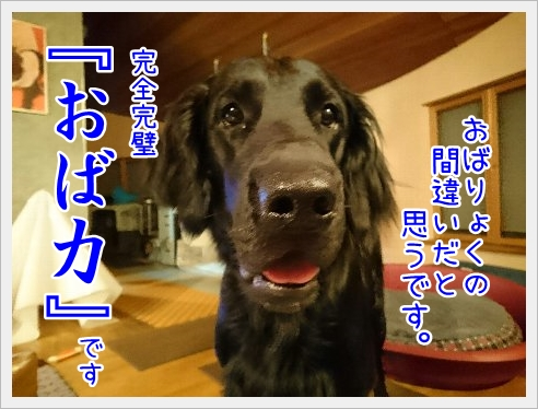 fc2_2016-05-18_04.jpg