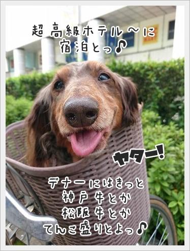 fc2_2016-05-20_02.jpg