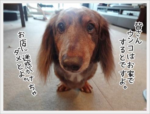 fc2_2016-06-27_05.jpg