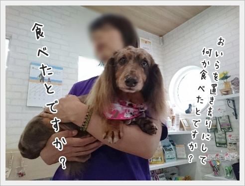 fc2_2016-08-23_05.jpg
