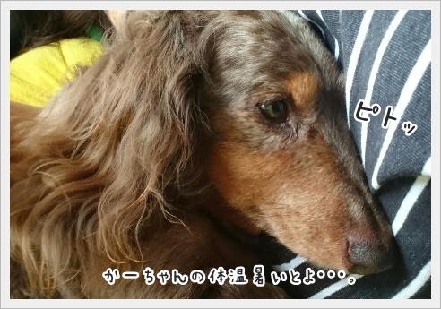 fc2_2016-08-25_01.jpg